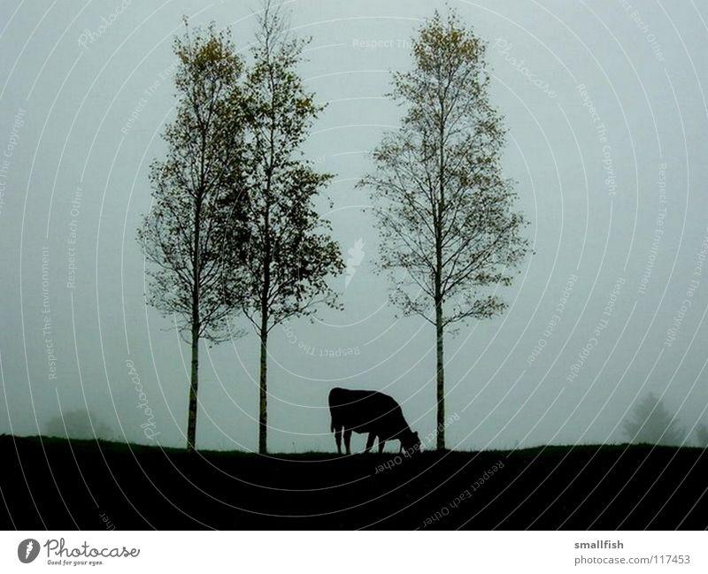 Kuh auf der Weide Baum Einsamkeit dunkel Nebel Säugetier unheimlich