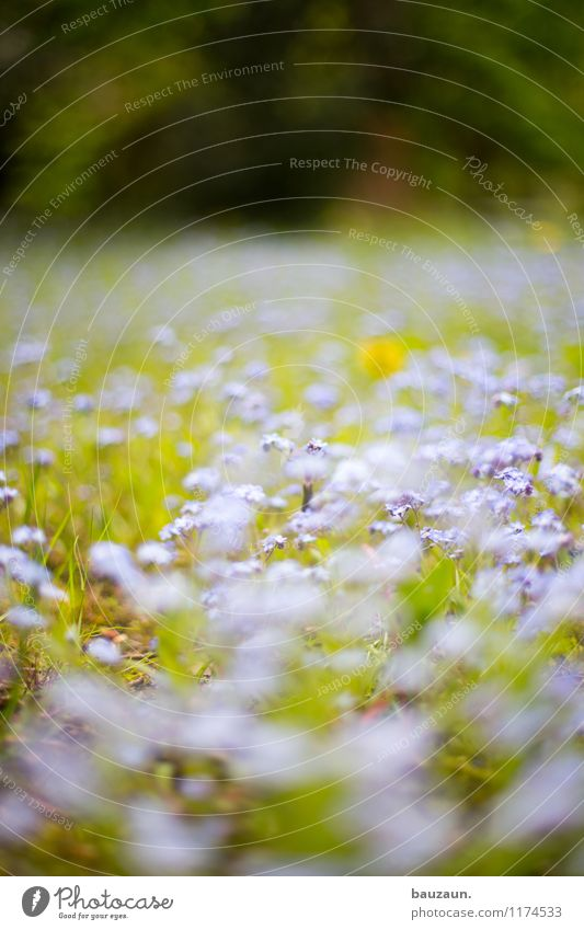 blümchen. Natur Ferien & Urlaub & Reisen Pflanze schön Sommer Erholung Blume Landschaft ruhig Freude Umwelt Frühling Wiese Gras Garten Park