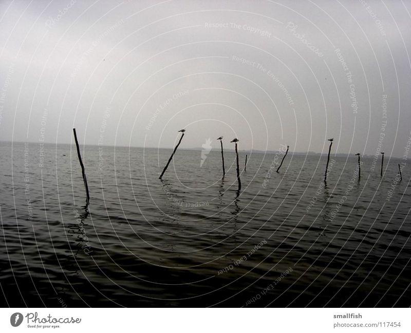 Pfosten Himmel Meer Einsamkeit dunkel Vogel Trauer Schifffahrt unheimlich Dänemark