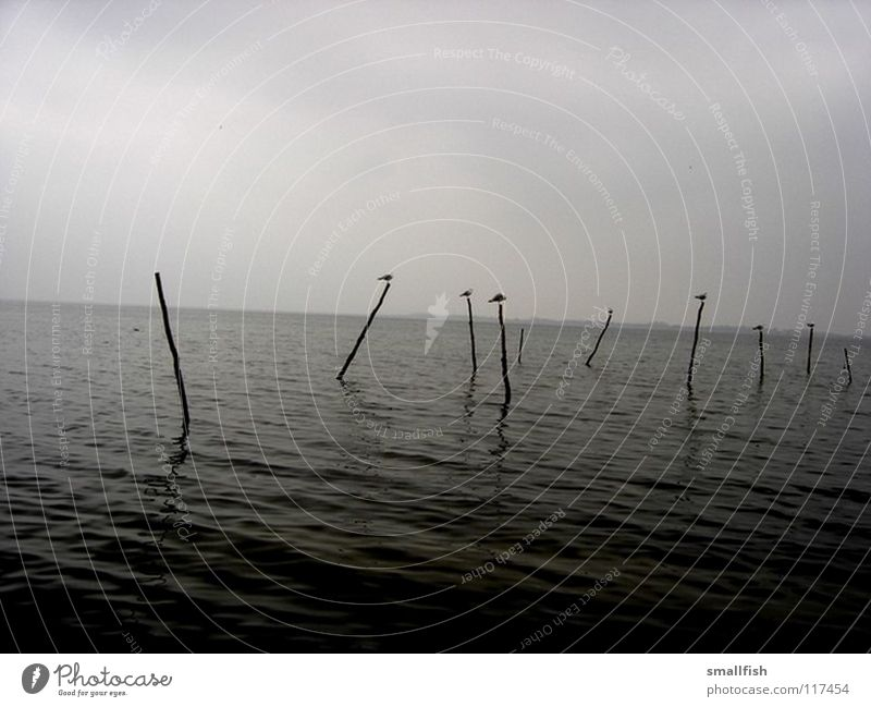 Pfosten Meer Vogel dunkel unheimlich Trauer Einsamkeit Schifffahrt Himmel Dänemark