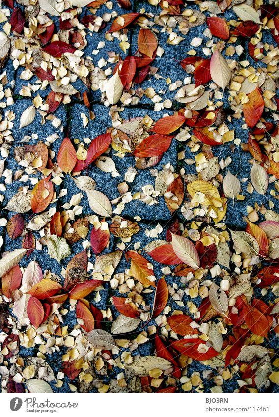 street art Herbst Blatt mehrfarbig durcheinander Asphalt Mischung mehrere rot gelb grau Hochformat vertikal ruhig Pause unten autumn fallen Bodenbelag ground