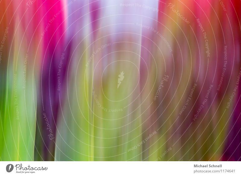 Tulpenfarben Umwelt Natur Pflanze Blume Tulpenblüte Garten Glück positiv trashig mehrfarbig durcheinander knallig Farbfoto Außenaufnahme Experiment abstrakt