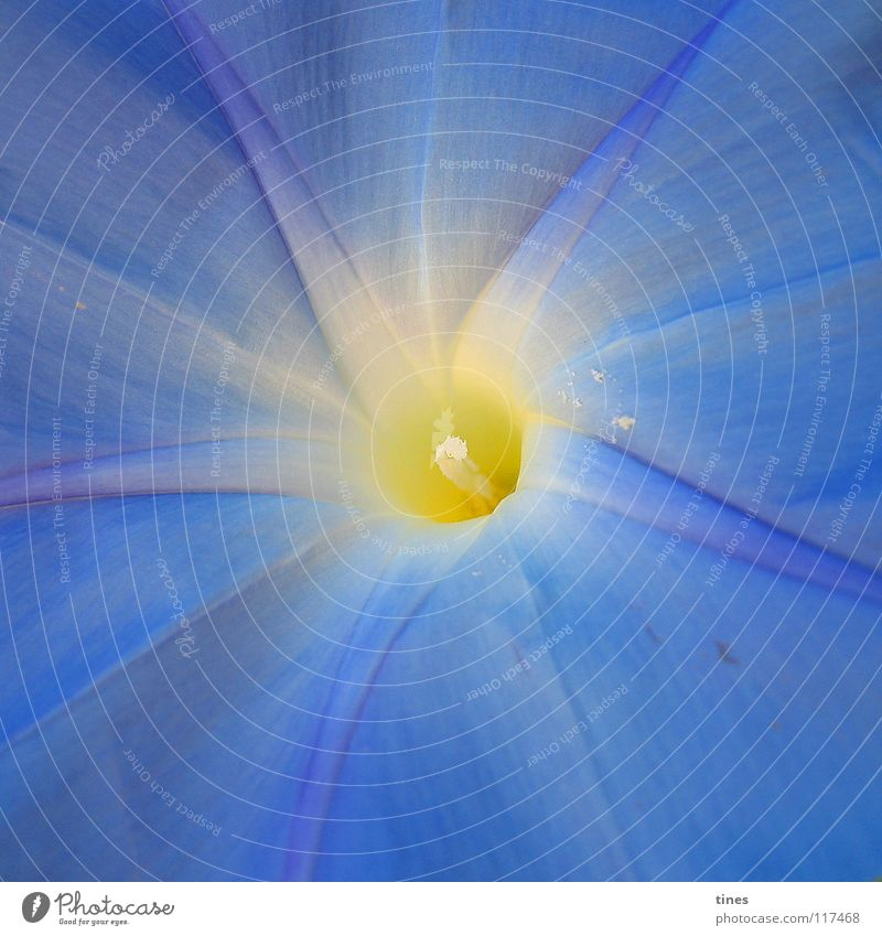 verlockendes Leuchten blau Blume gelb Lampe hell Stern (Symbol) Mitte Quadrat Mittelpunkt