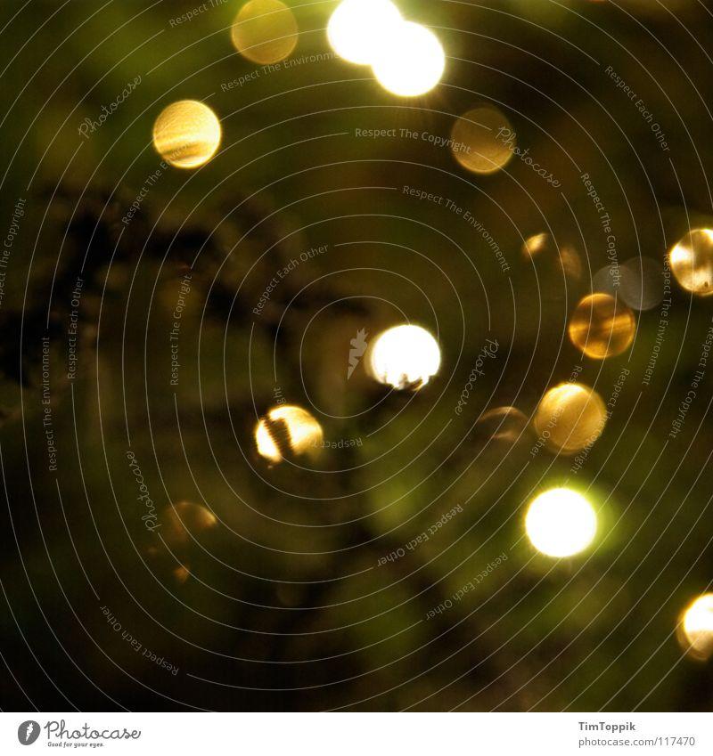 Dezemberlichter Tanne Licht grün Fichte Tannenzweig Weihnachtsbaum Baum Schmuck Baumschmuck Kerze Weihnachten & Advent Dekoration & Verzierung Beleuchtung Natur