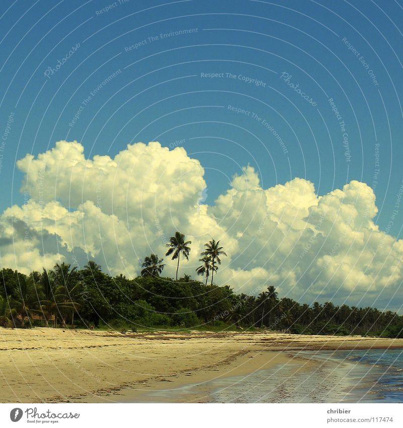 Schlagsahne Wasser Himmel weiß Meer blau Freude Strand Ferien & Urlaub & Reisen Wolken Erholung Sand Afrika Palme Unwetter Algen Kumulus