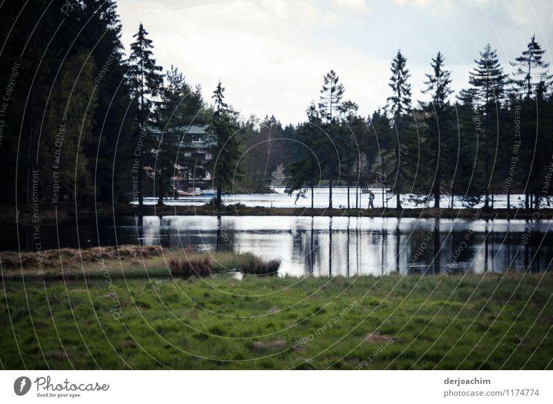 Angekommen Freude ruhig Freizeit & Hobby Ausflug Landwirtschaft Forstwirtschaft Landschaft Wasser Frühling Schönes Wetter Baum Gras Seeufer Bayern Deutschland