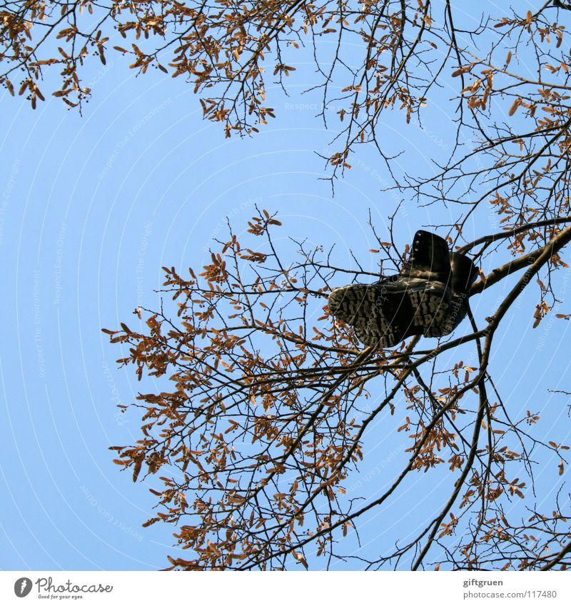 keep your feet on the ground Baum Schuhe Stiefel baumeln hängen Blatt schwarz Wut Ärger Bekleidung Himmel Ast mit beiden beinen am boden werfen blau stiefelbaum