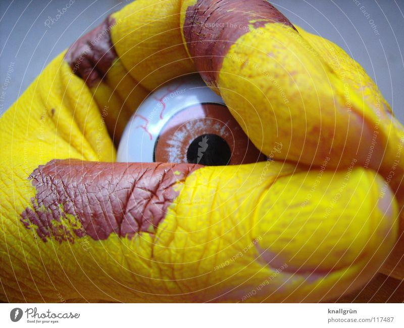 Fixiert Auge Tier gelb braun Finger streichen obskur scheckig Pupille fixieren