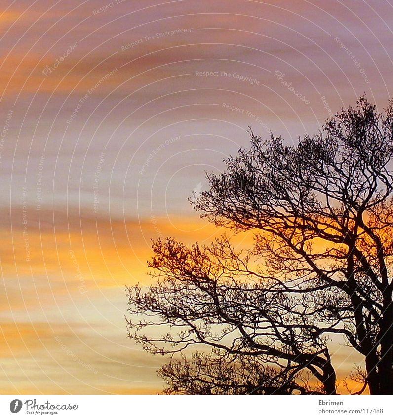 Abendrot 2 Uhr nachmittags Baum violett Stimmung schwarz Wolken gelb halbdunkel Geäst Dämmerung Baumkrone Froschperspektive weiß Winter Himmel Abenddämmerung