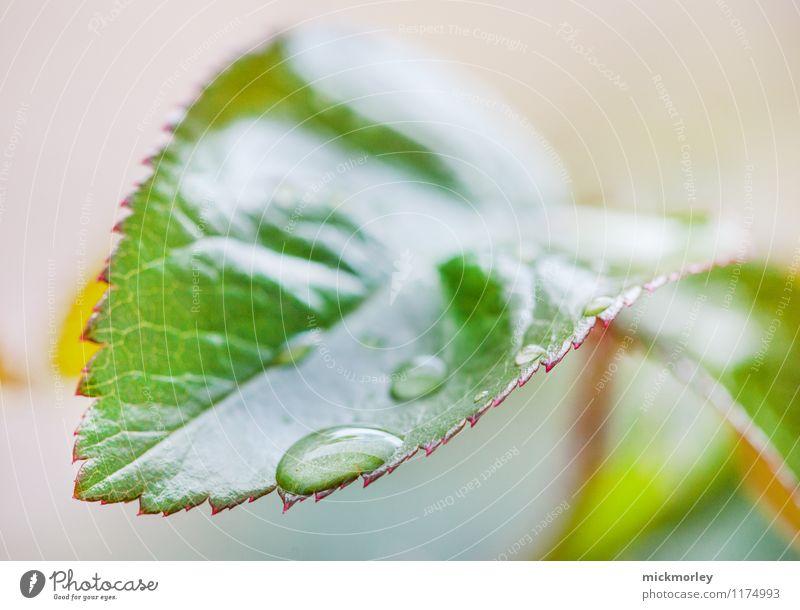 Ruhend und wartend Natur Pflanze grün Erholung Blatt ruhig Umwelt Leben Gesundheit Stimmung Gesundheitswesen Regen Zufriedenheit Wetter nass Romantik