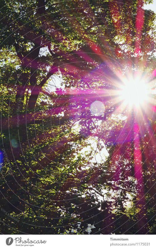 A sunny day. Umwelt Natur Pflanze Sonne Sonnenlicht Frühling Schönes Wetter Baum Wald ästhetisch hell gelb grün violett rot schwarz Gefühle Frühlingsgefühle