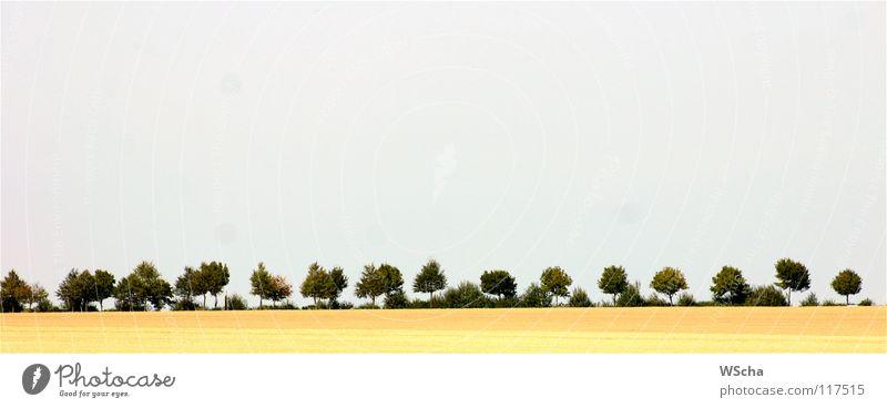 Landschaft 07 Natur Baum Farbe Umwelt Pflanze