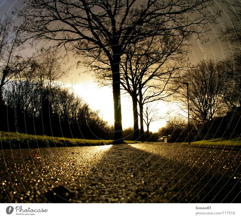 Baum der Erleuchtung Dämmerung Bürgersteig Licht Wolken Wintertag Sonne Kontrast Straße Himmel Landschaft