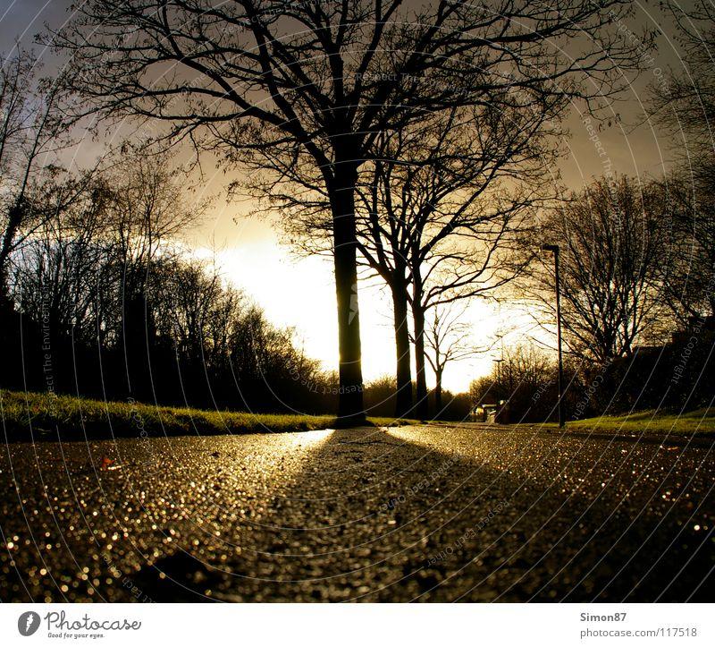 Baum der Erleuchtung Himmel Sonne Winter Wolken Straße Landschaft Bürgersteig Wintertag