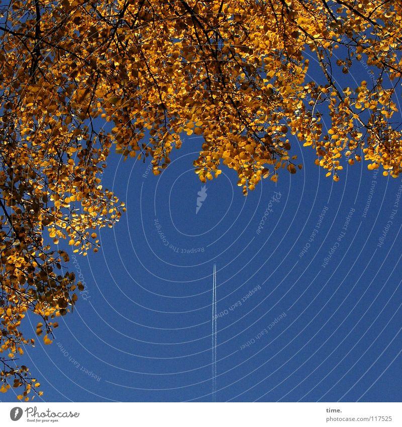 Reise zum Herbst Ferien & Urlaub & Reisen Luftverkehr Himmel Klima Baum Blatt Flugzeug fliegen Wachstum natürlich blau braun gold Heimweh Fernweh Farbe