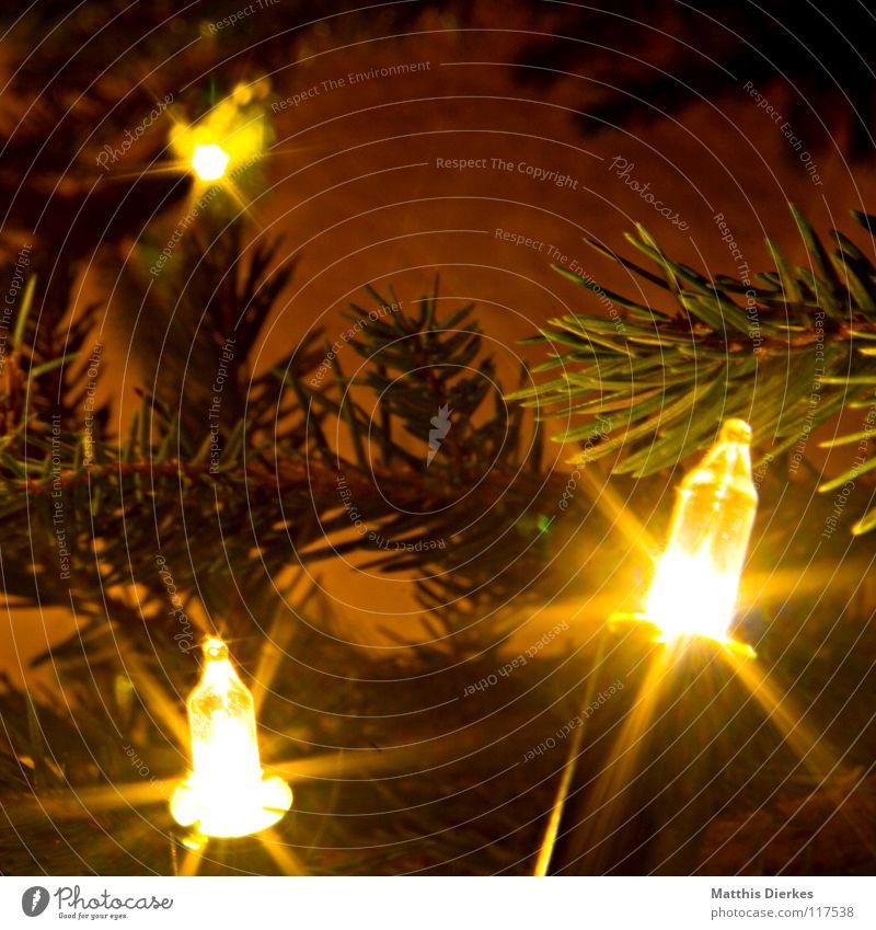 Lichterkette Weihnachten & Advent Weihnachtsbaum schön glänzend Rauschmittel Tannennadel Glühbirne verzweigt Langzeitbelichtung Vordergrund 3 Hintergrundbild