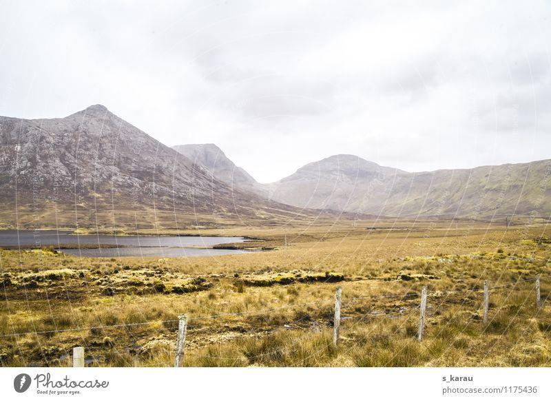 Irische Wiesen Natur Ferien & Urlaub & Reisen Pflanze grün Wasser Landschaft ruhig kalt gelb Frühling Gras natürlich Freiheit See Felsen