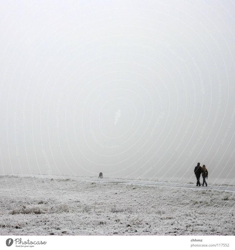 Weißinweiß Hund Baum Einsamkeit Winter kalt Schnee Garten Paar Park Eis Nebel paarweise Frost Spaziergang diagonal