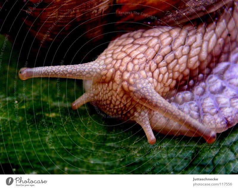 Aus dem Weg! Tier Blatt süß Sicherheit Fressen Langeweile Schnecke Ekel krabbeln Salat Reptil schleimig herzlich Schneckenhaus Schleim Gemüse