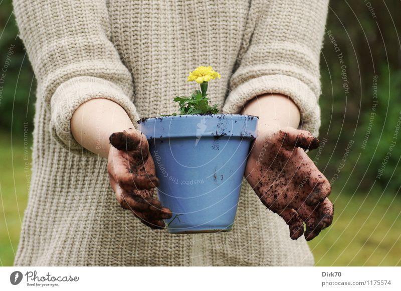 Gartensaison ist wieder eröffnet! Mensch Natur blau grün Blume Hand Erwachsene gelb Leben Frühling feminin braun Wohnung Freizeit & Hobby Wachstum