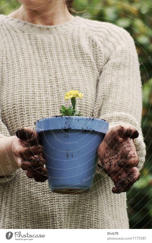 Macht euch 'mal die Finger schmutzig! Mensch Frau Natur blau Pflanze grün Blume Hand Erwachsene gelb Frühling Blüte natürlich feminin Garten braun