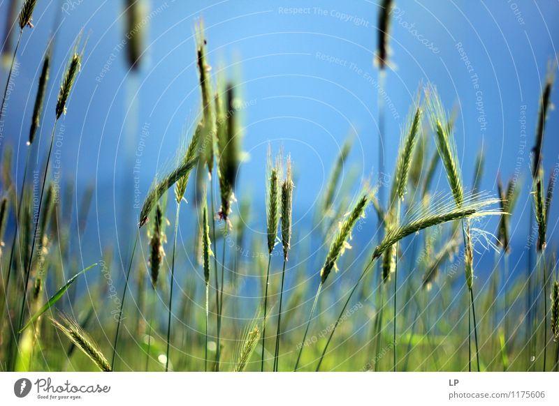 Frühlingspastell 1 Himmel Natur blau Pflanze grün ruhig kalt Leben Glück Luft Wachstum frisch Idylle Lebensfreude einfach