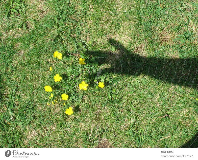 Vielen Dank für die Blumen Hand Sonne Sommer gelb Wiese Gras Freiheit Glück Arme klein heiß deutlich Weide Schattenspiel