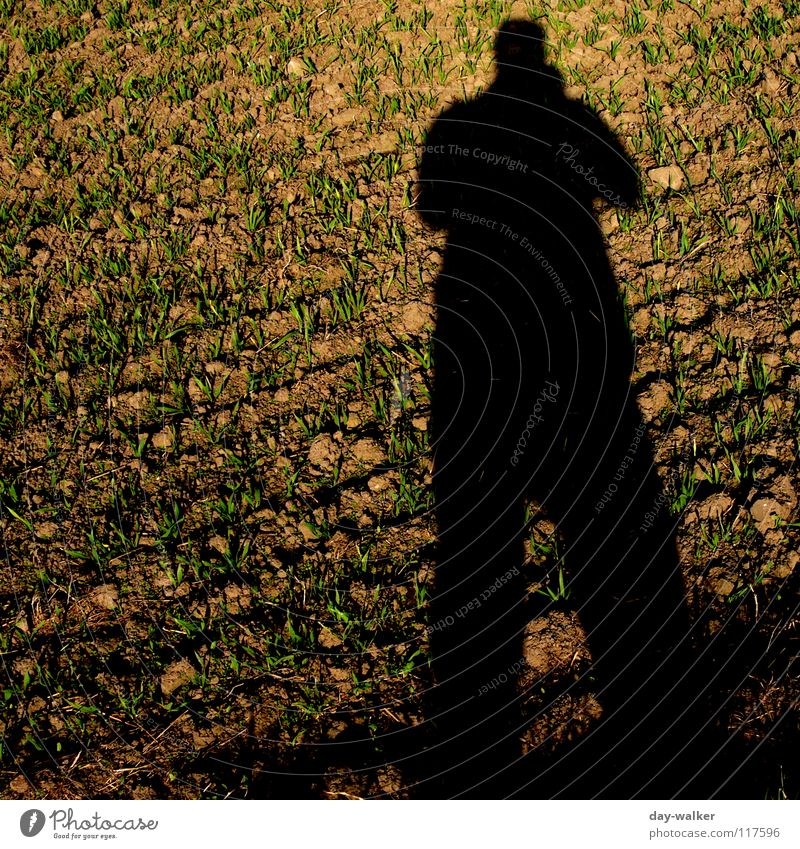 Unwirklich falsch Feld Spiegel Verlauf Muster Silhouette kalt Herbst Schatten Täuschung Illusion Farbe Natur Außenaufnahme