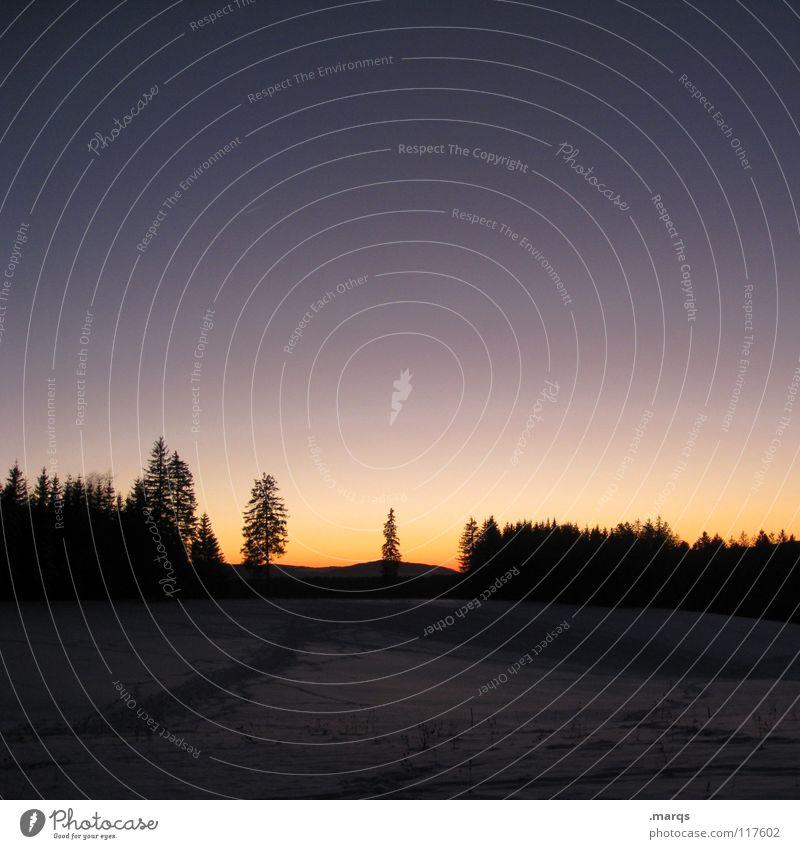 Ordinary Sunset Schwarzwald Wald Baum einzeln Winter kalt Sonnenuntergang Dämmerung Färbung dunkel Horizont Hügel Wetter Einsamkeit Single Klarheit