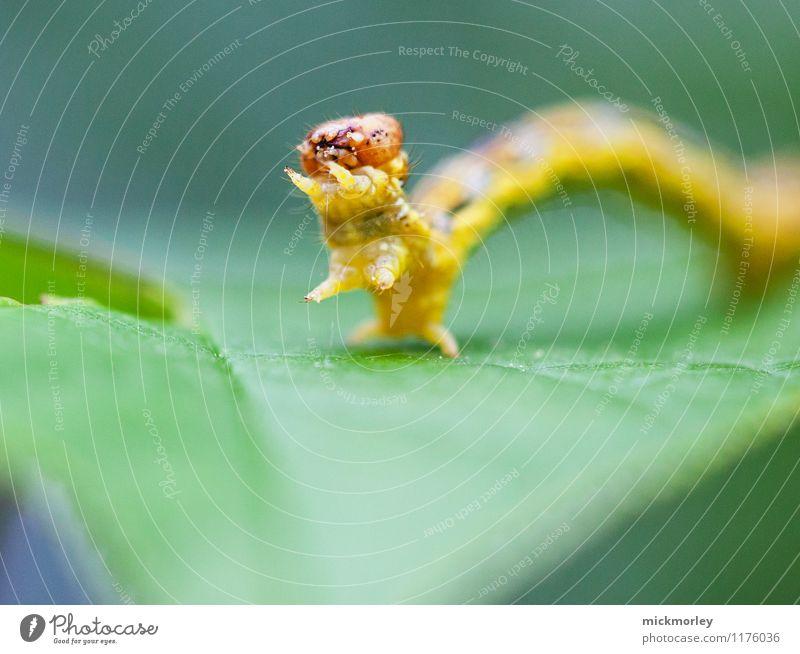 Raupengruß Natur Blatt Wald Umwelt Garten außergewöhnlich Angst gefährlich Baby beobachten bedrohlich Abenteuer Wandel & Veränderung Neugier Risiko entdecken