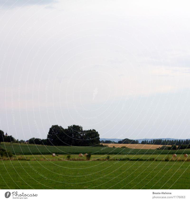 Nach getaner Arbeit Himmel Natur Ferien & Urlaub & Reisen blau grün Sommer Baum Erholung Landschaft ruhig Wald gelb Gras hell Arbeit & Erwerbstätigkeit Feld