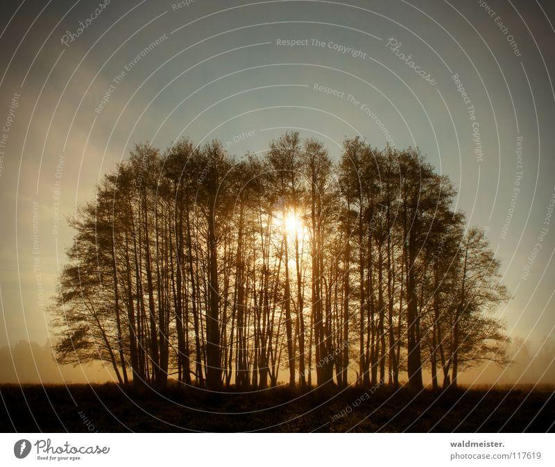 Und der Tag erwacht Baum Sonne Sommer Wald Herbst Wiese Nebel Romantik Wäldchen Morgennebel Erlen
