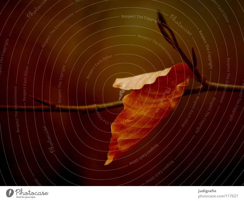Festhalten Natur Baum Pflanze Farbe Blatt Winter ruhig Umwelt Tod Leben Wärme Herbst Ast festhalten fallen Physik