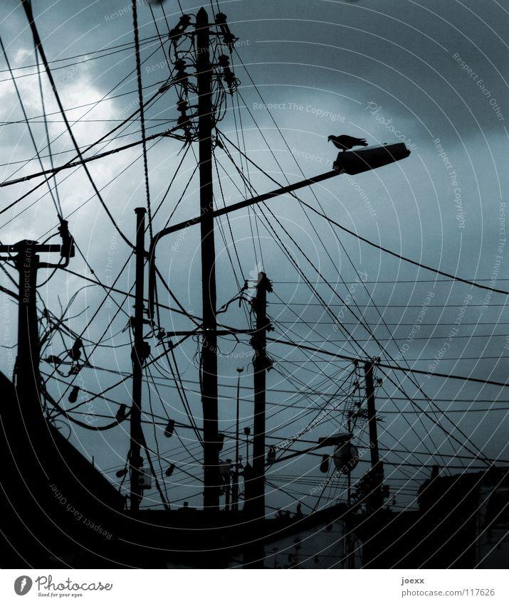 Kommunikationstechnik damals und heute schlechtes Wetter Brieftaube chaotisch Draht dunkel durcheinander grau Laterne ratlos Straßenbeleuchtung Kabel Taube