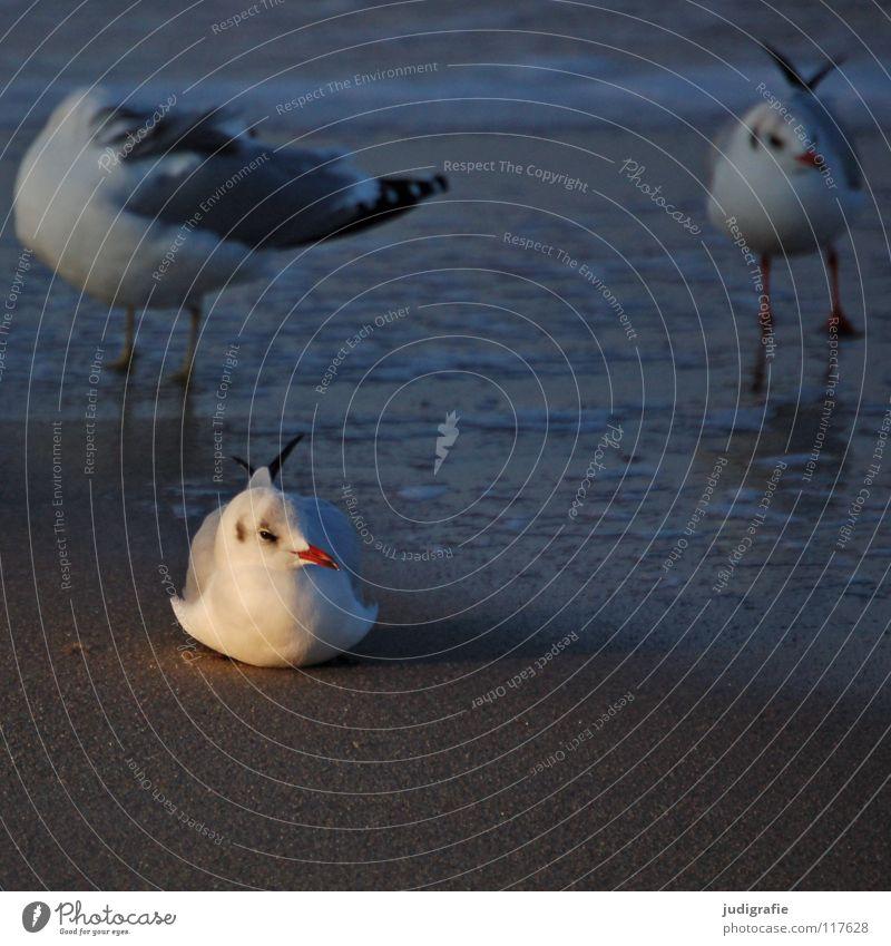 Möwen Natur Meer Winter Strand Ferien & Urlaub & Reisen ruhig Tier Farbe See Sand Eis Beine Vogel Küste Umwelt fliegen