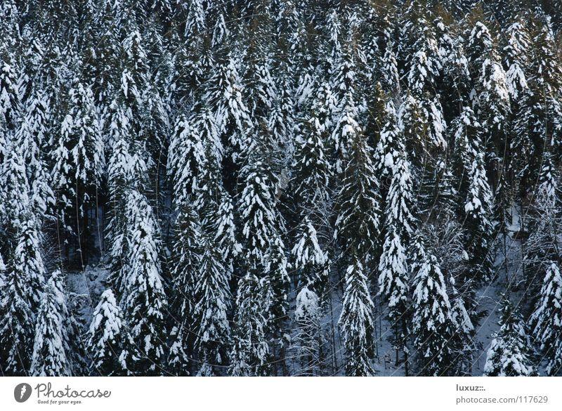 Den Wald vor lauter Bäumen Winter Schnee Energiewirtschaft Tanne nachhaltig Brennholz Rohstoffe & Kraftstoffe regenerativ Erneuerbare Energie Waldsterben