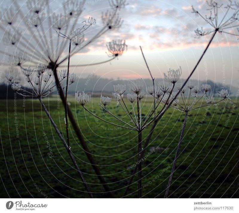 Bansin, Landseite Himmel Ferien & Urlaub & Reisen Pflanze Winter Wolken ruhig Erholung Wiese kalt Gras Blüte Frost Landwirtschaft Weide Steppe Argentinien