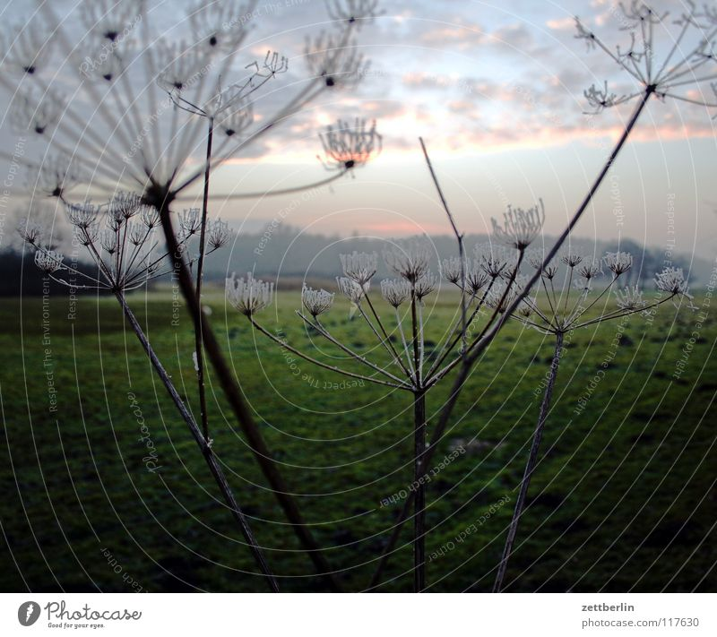 Bansin, Landseite Winter kalt Raureif Winterabend Wiese Heide Steppe Pampa Gras Landwirtschaft Gewöhnliche Schafgarbe Pflanze Doldenblüte Blüte Wolken