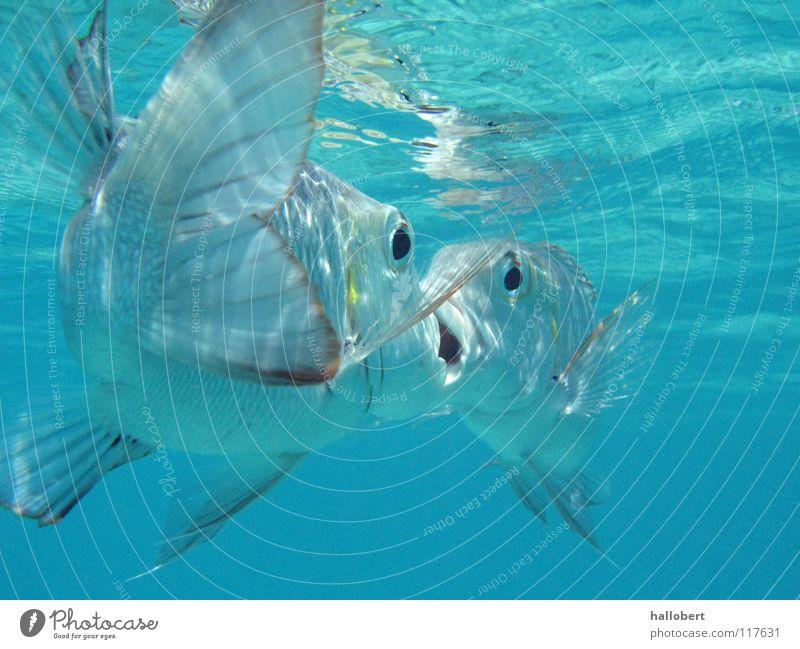 Malediven Water 10 Meer Riff tauchen Schnorcheln Ferien & Urlaub & Reisen Tierschutz Wasser Fisch Unterwasseraufnahme traumurlaub meer von unten deep blue sea