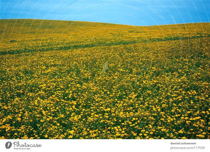 Frühlingswiese Sommer Hintergrundbild Blumenwiese schön zyan Wiese Freizeit & Hobby Blüte grün gelb Löwenzahn Erholung Horizont Hügel Wärme Schönes Wetter
