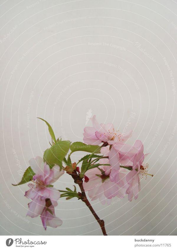einsam weiß Einsamkeit Blüte