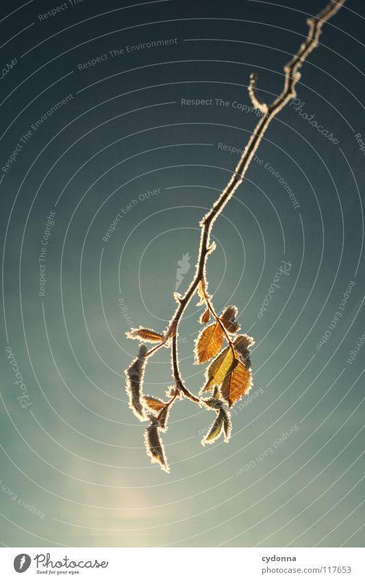 Der Sonne so nah ... Himmel Natur weiß schön blau Pflanze Winter Blatt ruhig Einsamkeit Farbe Leben kalt Schnee Tod