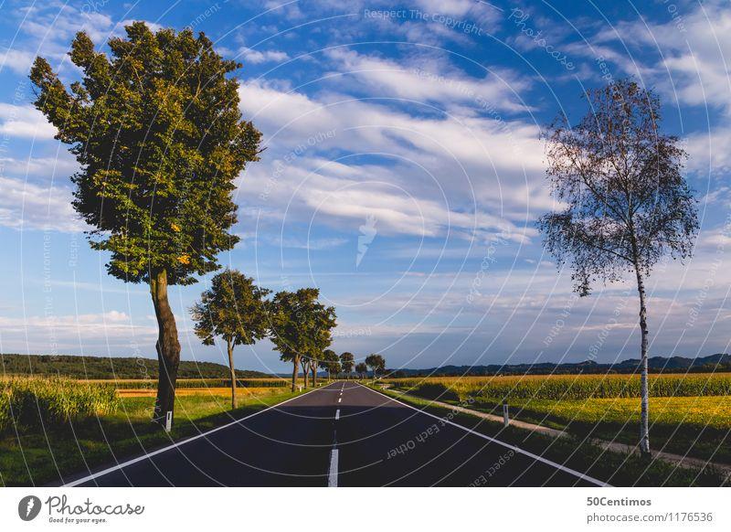 Landstrasse in der Steiermark Himmel Natur Ferien & Urlaub & Reisen Sommer Baum Erholung Blume Landschaft ruhig Wolken Straße Frühling Wiese Zeit Freiheit