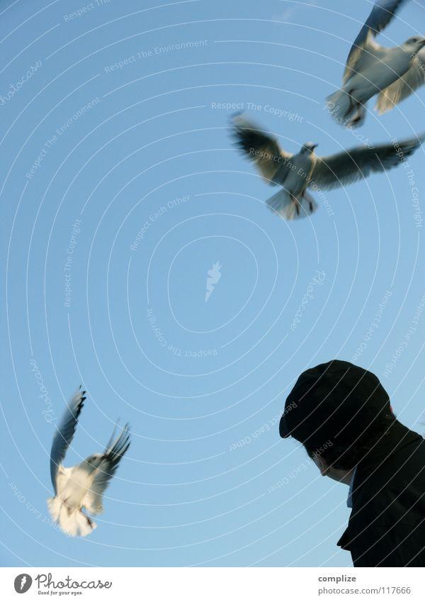 Vögel Vogel füttern Futter Schnabel verloren Verlierer Futterneid Sommer Tier 2 ausbreiten Meer See Meeresvogel Strand Mann Akrobatik seltsam möve wegschnappen
