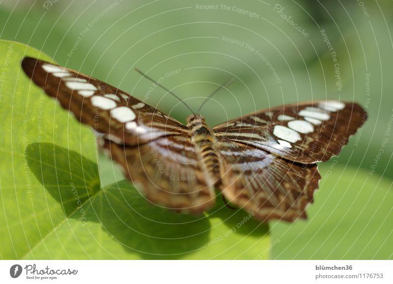 Sonnenanbeter Natur Pflanze schön Erholung Blatt ruhig Tier natürlich außergewöhnlich fliegen elegant Wildtier sitzen warten Flügel beobachten