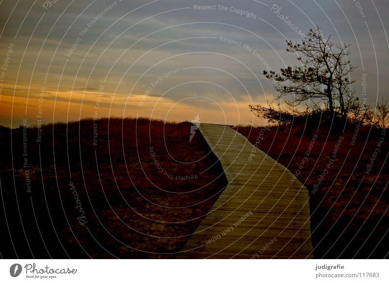 Darßer Ort Natur schön Himmel Baum Sonne Winter Strand Ferien & Urlaub & Reisen Wolken Farbe Gras Berge u. Gebirge Holz Wege & Pfade Küste Umwelt