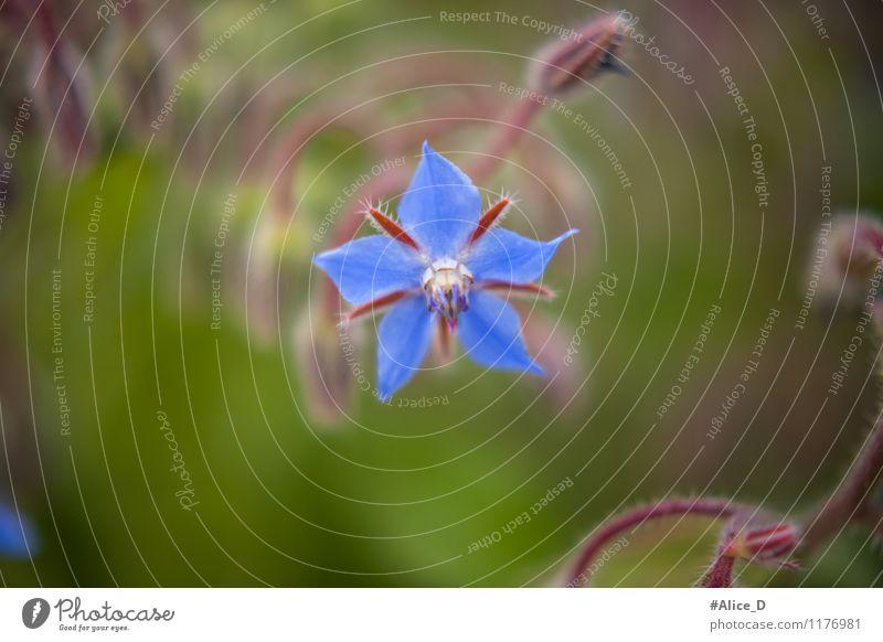 Wildblüte Umwelt Natur Pflanze Tier Frühling Blume Gras Sträucher Blüte Wildpflanze Feld Blühend blau grün violett türkis Naturhintergrund Wiesenblume