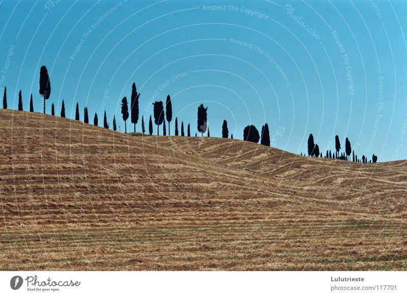 Die Wüste Toskana Himmel blau Baum Landschaft Ferne gelb Wärme Gefühle Freizeit & Hobby Feld Idylle Italien Schönes Wetter Romantik Jahreszeiten Getreide