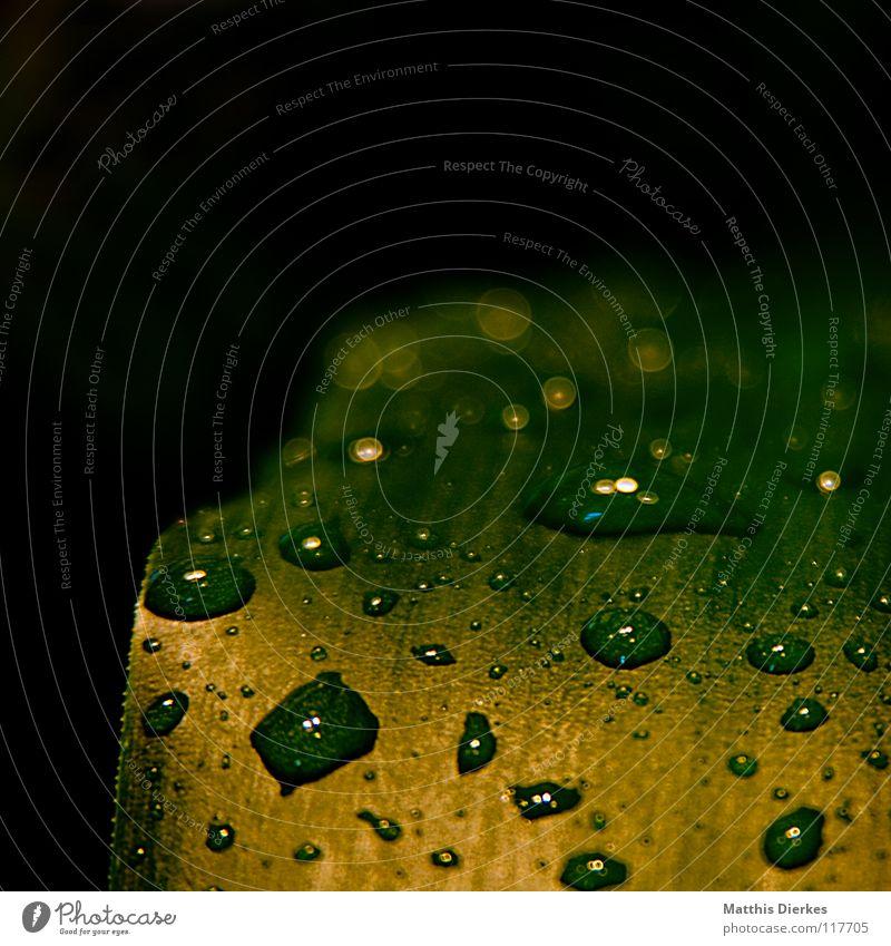 Tropfen III Wasser grün Blatt hydrophob ästhetisch edel fantastisch Märchen Wassertropfen Baum Sträucher gelb stehen Schweben gleiten Licht geblitzt