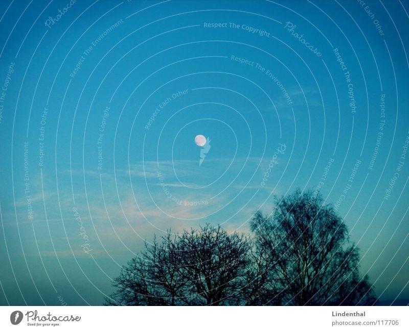 16:00 h (Winterzeit) Himmel Baum Wolken Beleuchtung Treppe Mond Abenddämmerung untergehen Himmelskörper & Weltall Mondaufgang